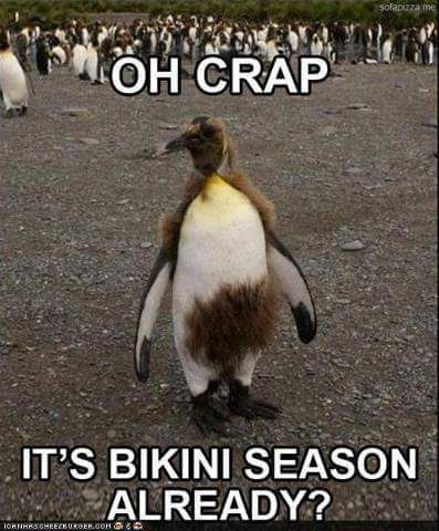 IT'S THAT TIME OF YEAR AGAIN……SO …. WHY WAX???